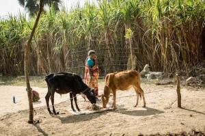 field-crops-woman-livestock