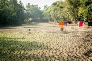 Plantings(dry field)