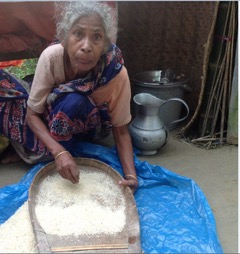 Rice-culling from Bony-GHNI-Bangladesh Team Distribution