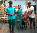 Jatapara Village goats ...