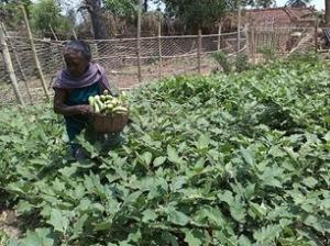 Jatapara 6-'16 new farming TCD initiates